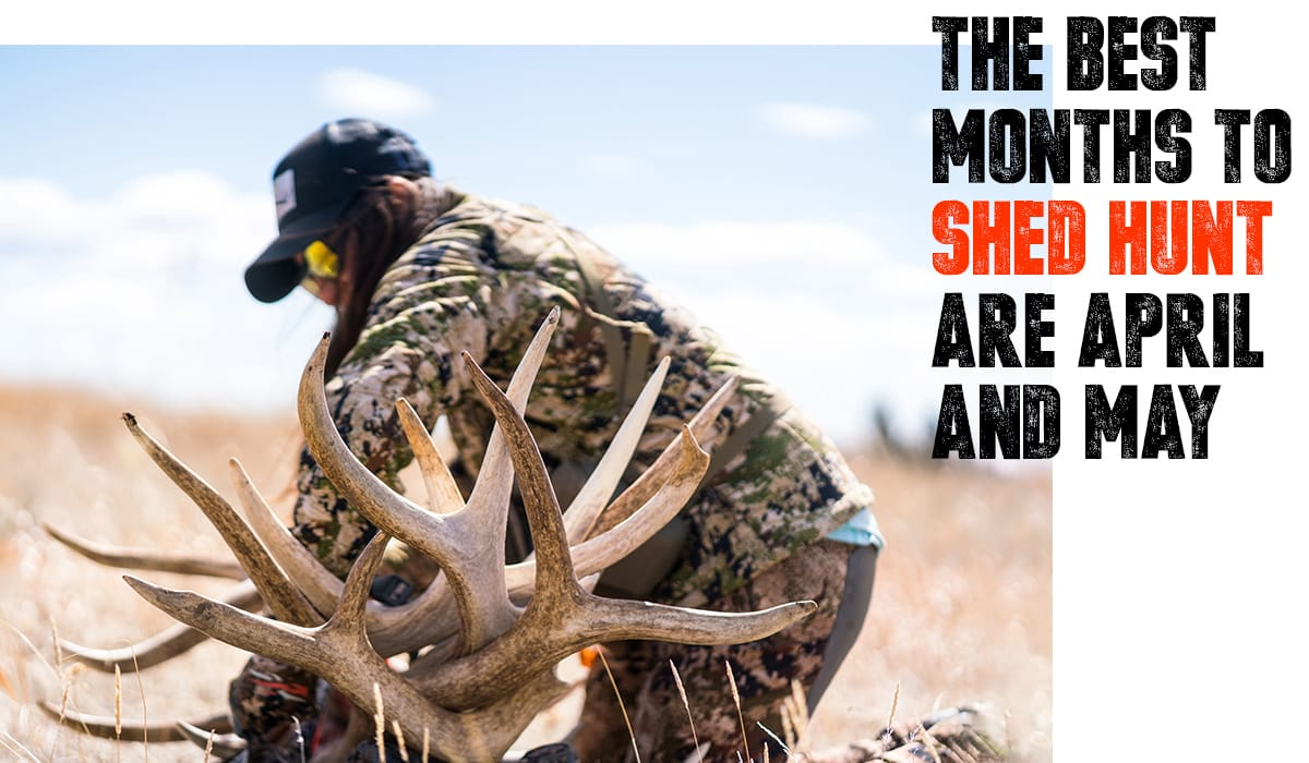 The best months to shed hunt with Steven Drake. Image of woman with pile of sheds.