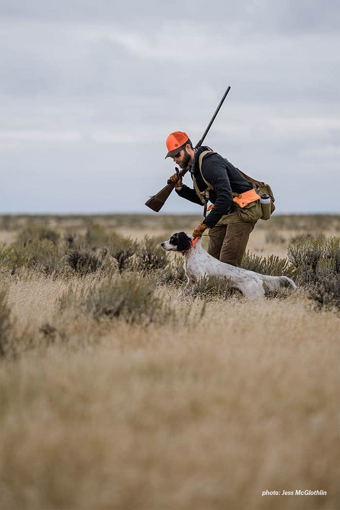 A young setter is held by his owner while hunting sage grouse in eastern Montana.