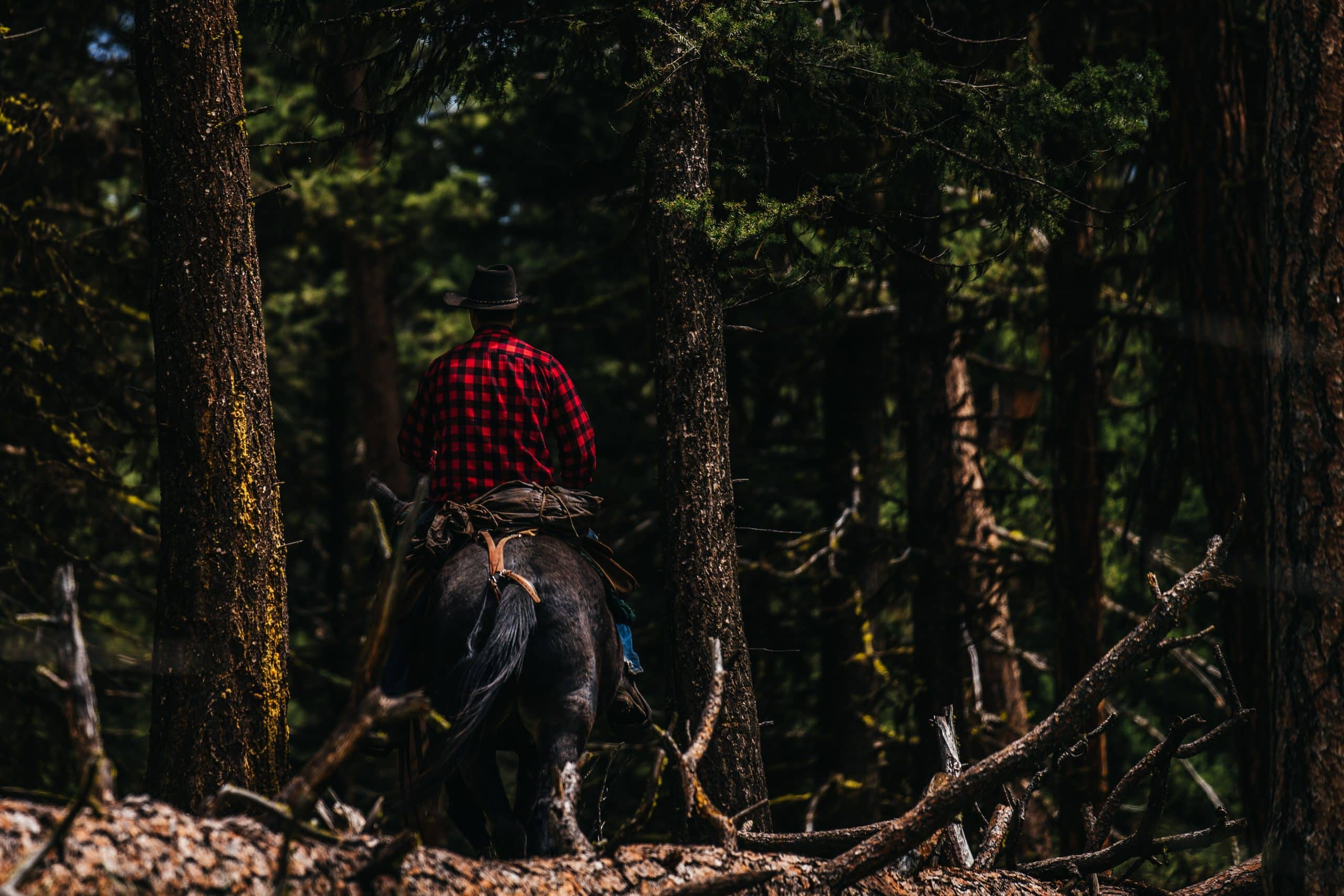 A horseman rides through the woods looking for elk antlers.