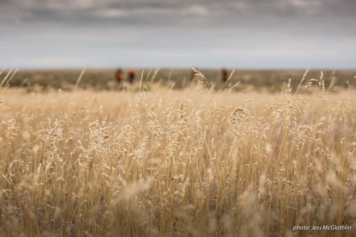 McGlothlin_MT_grass_upland_hunting-50.jpg?mtime=20190306093113#asset:61234
