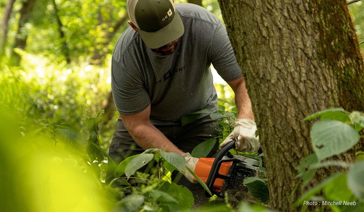 A land manager cuts down a tree to improve wildlife habitat.