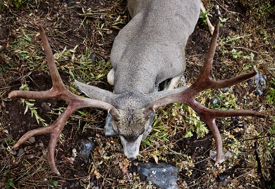 Trophy mule deer buck entered in the Boone & Crockett records.