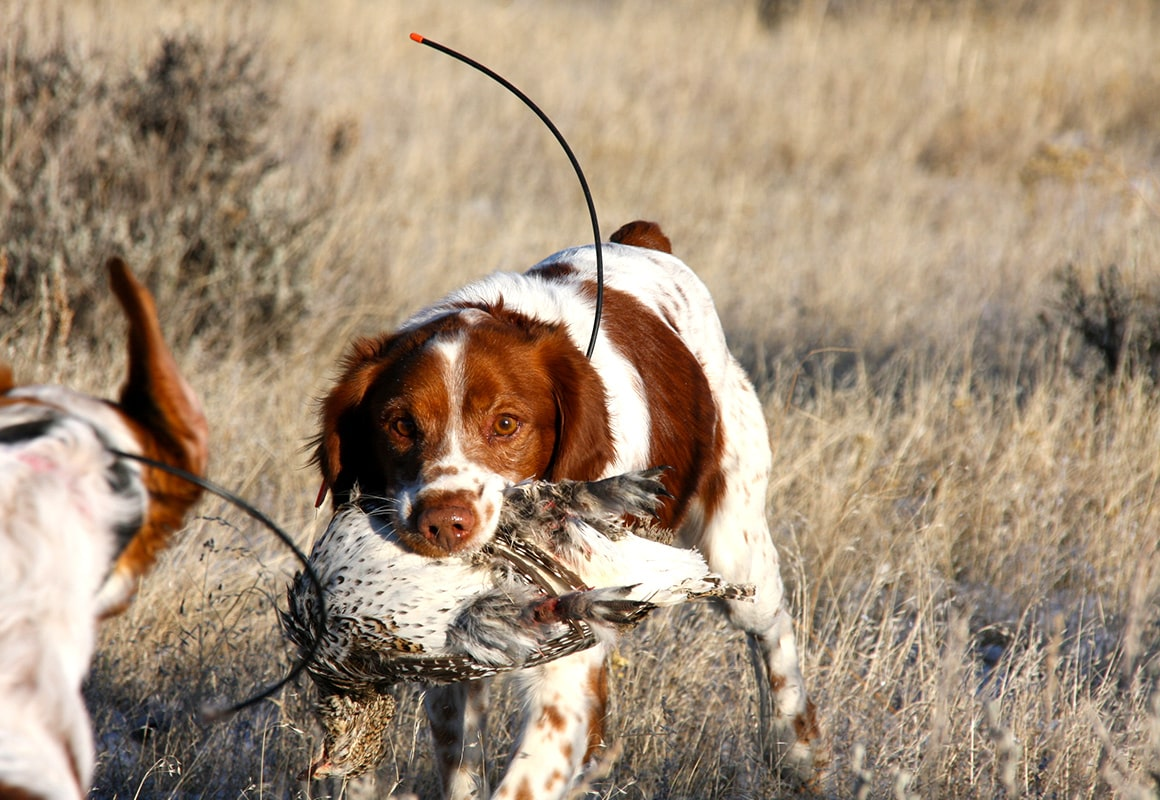 onx-dog-training-blog-dog-retrieving-bird.jpg?mtime=20180809124026#asset:36104
