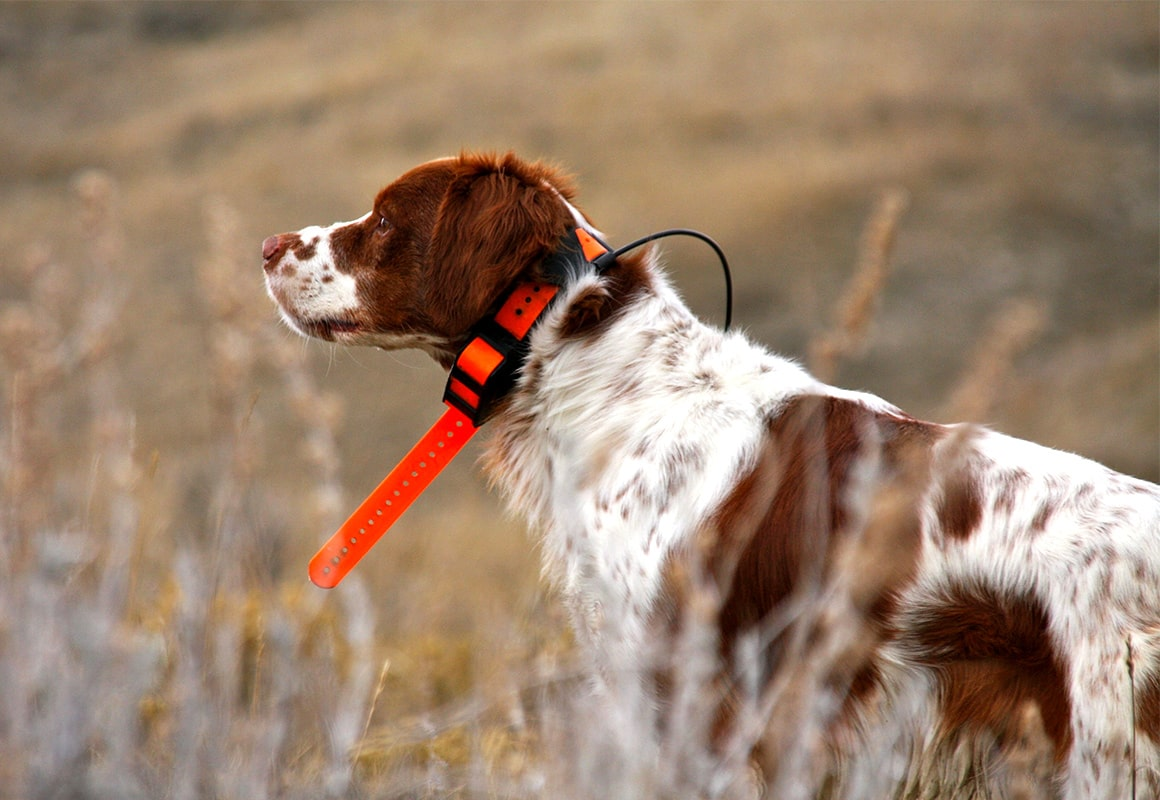 onx-dog-training-blog-dog-with-gps-collar.jpg?mtime=20180809124027#asset:36105