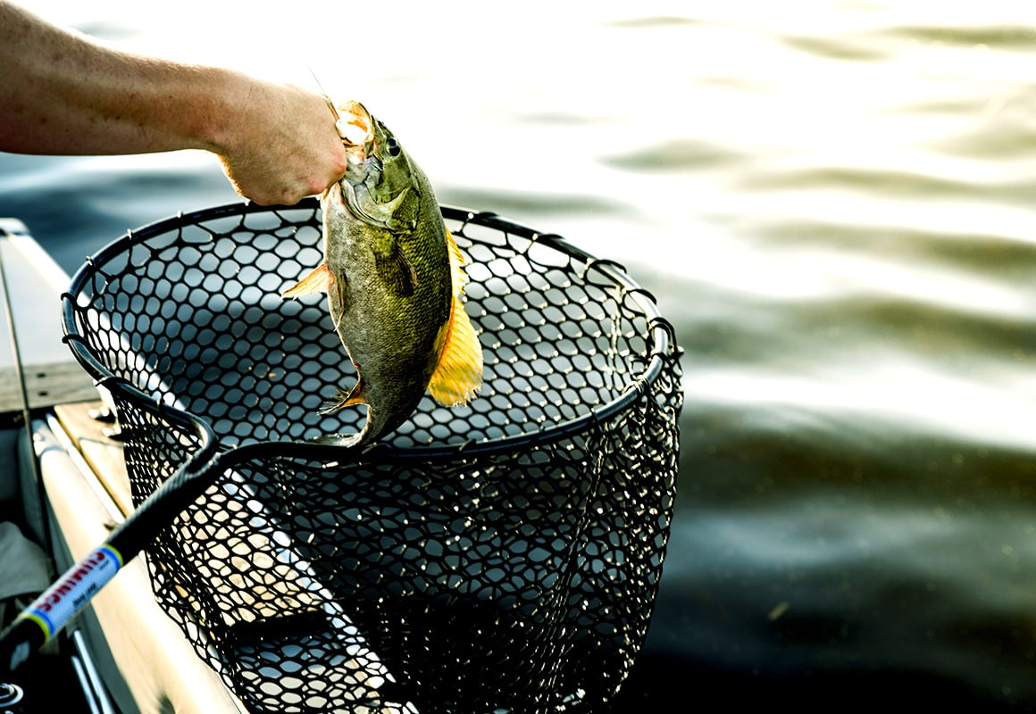 Fisherman using landing net to catch bass at boat