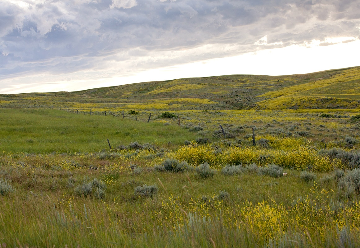 The rolling hills and covered gullies of Eastern Montana provide prime habitat for upland birds.