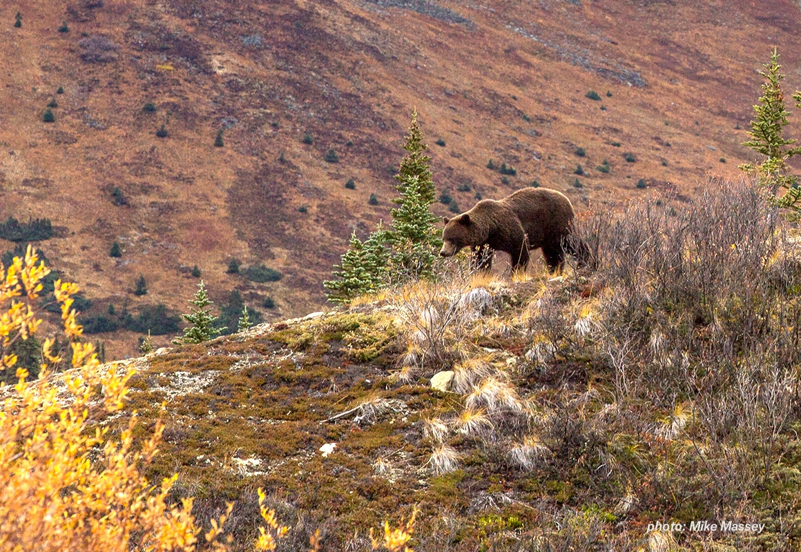 The Idaho and Wyoming grizzly bear seasons are suspended two weeks as a Federal judge further decides how to handle the case.