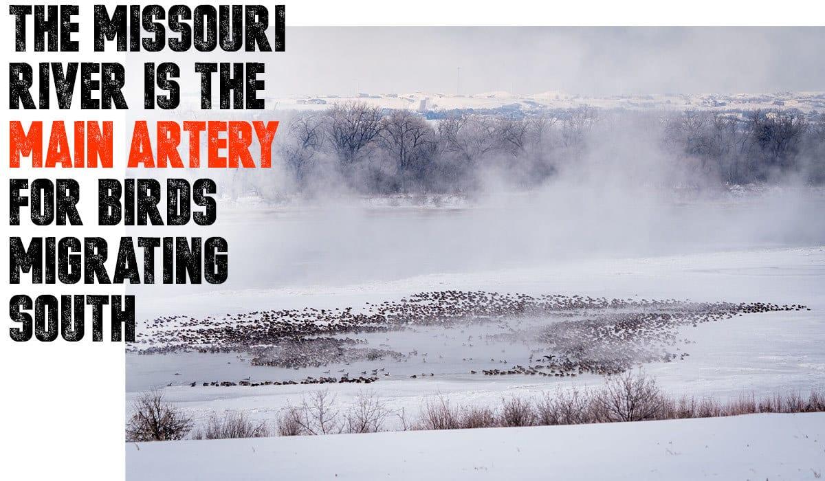 Anyone's Hunt: North Dakota Waterfowl Missouri River