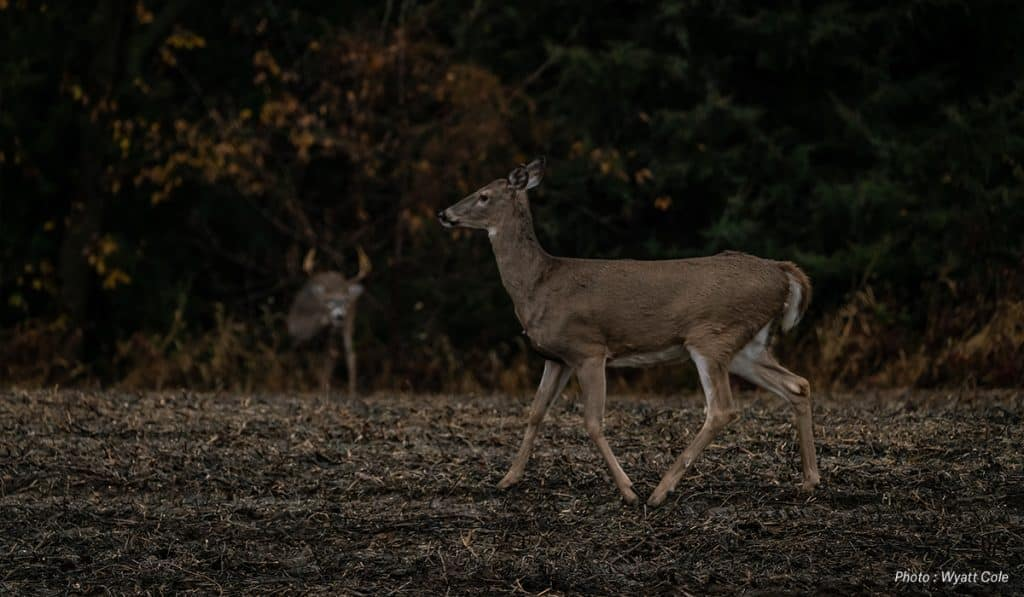 Hunt the Rut in the South - onX