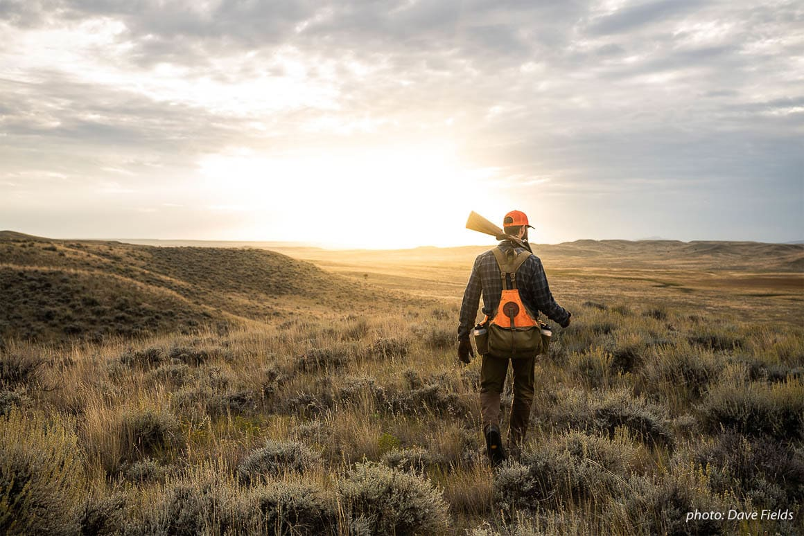 Garrett Mikrut walks into the sunset while upland bird hunting in eastern Montana.