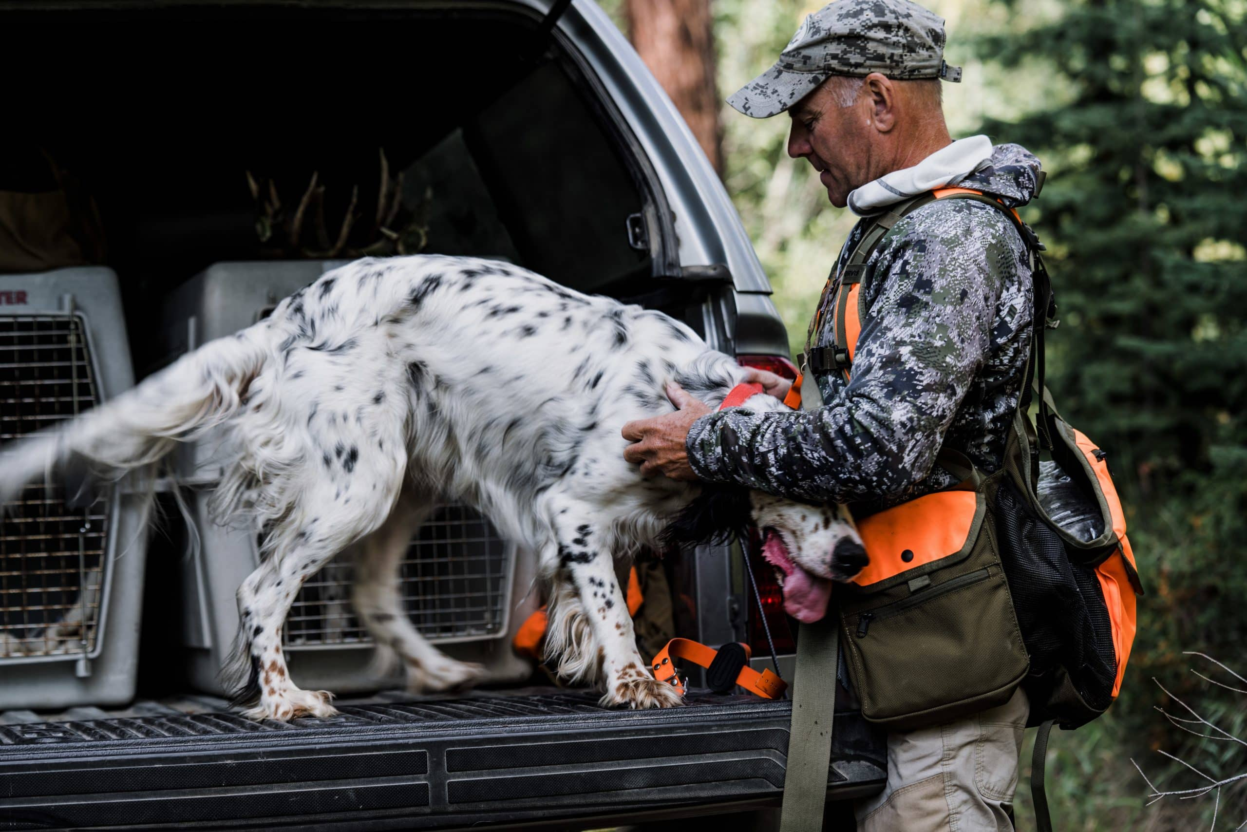 Montana outfitter Tim Linehan gets his setter ready for the hunt.
