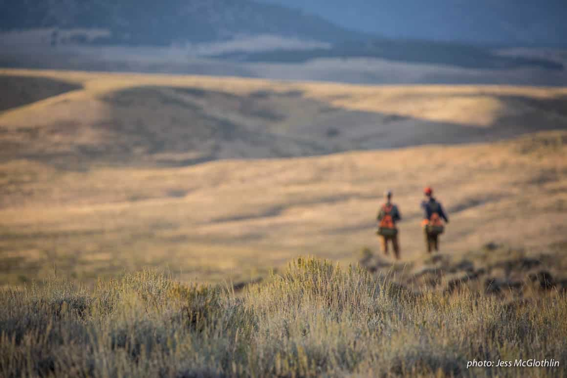 Men overlooking sage-covered hillside while upland bird hunting in eastern Montana at sunset.