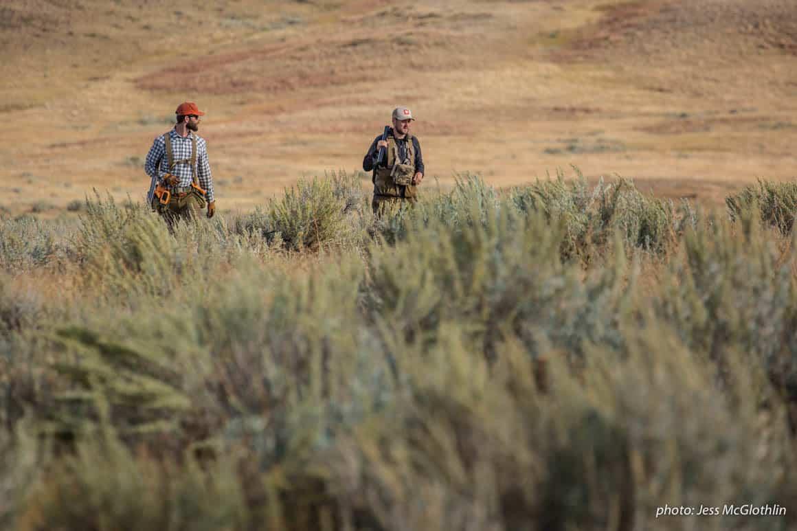 Men walk through a field while upland bird hunting in Montana.