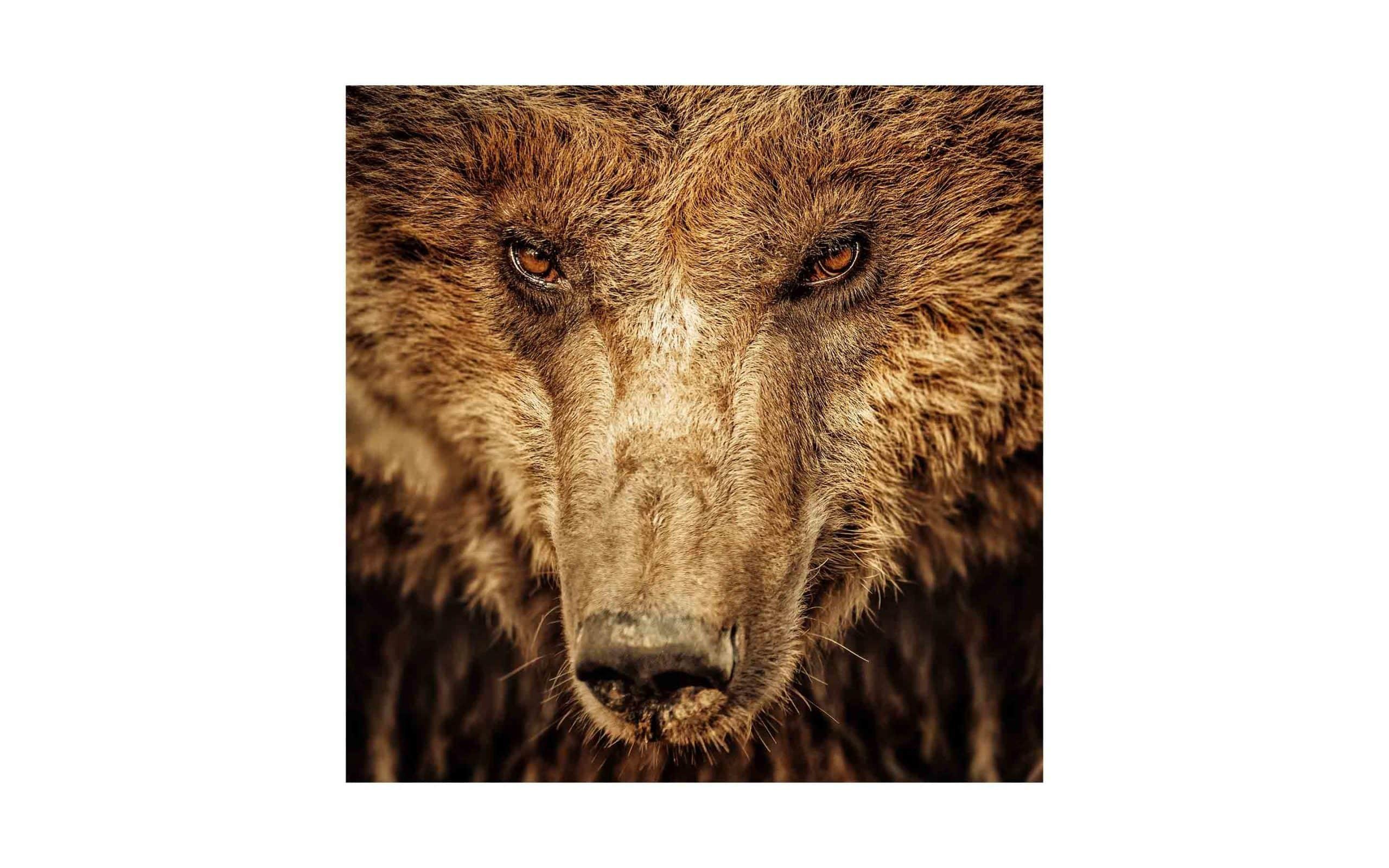 ak-grizz-via-shutterstock.jpg?mtime=20170811093756#asset:6246