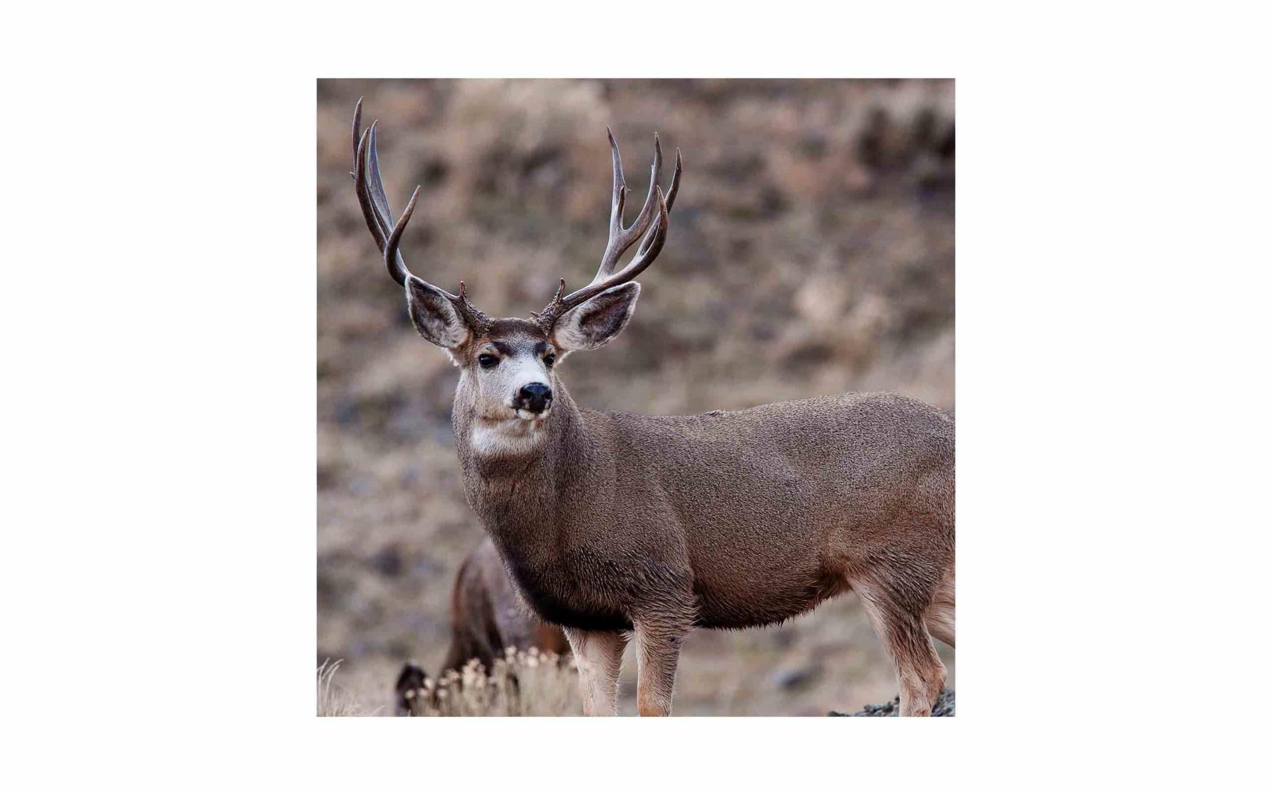 az-mule-deer-via-shutterstock.jpg?mtime=20170811134650#asset:6290