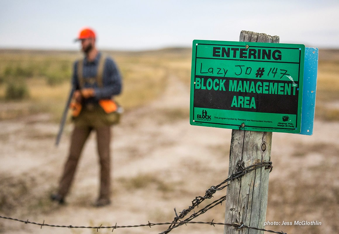 An upland hunter walks out of a section of Montana Block Management land.