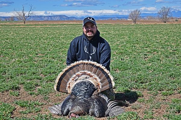 Man with Merriam's turkey shot in a green field near Colorado Springs, Colorado.