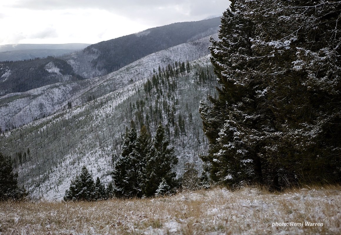 Image of wildfire burn area in the mountains with snow.