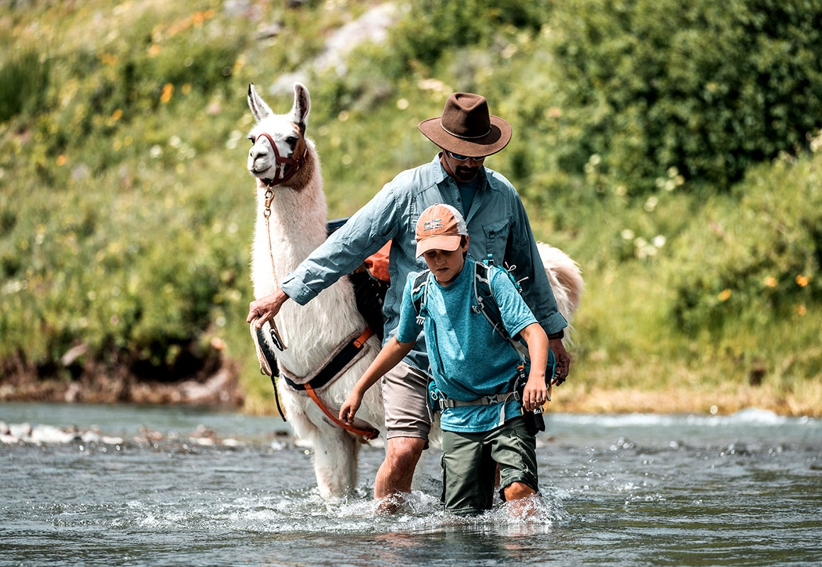 Marcus the Public Lands Llama wades a creek with two hikers in Yellowstone National Park.