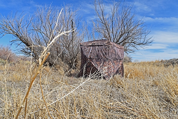 Turkey hunting blind set in a field for hunting near Colorado Springs, Colorado.