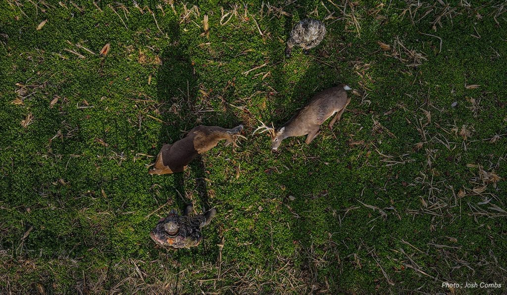 Hunting the Mississippi Deer Rut