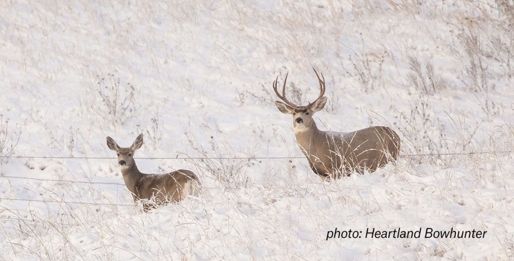How to use a GPS for hunting deer and elk