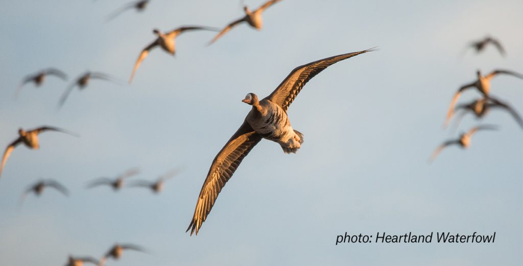 How to use a GPS for hunting waterfowl