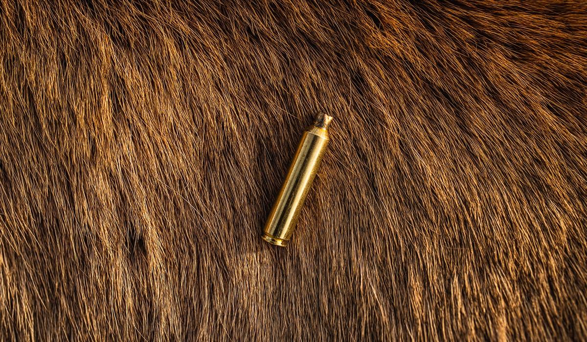 Success hunting elk using the onX Hunt App. Empty cartridge against elk hide.