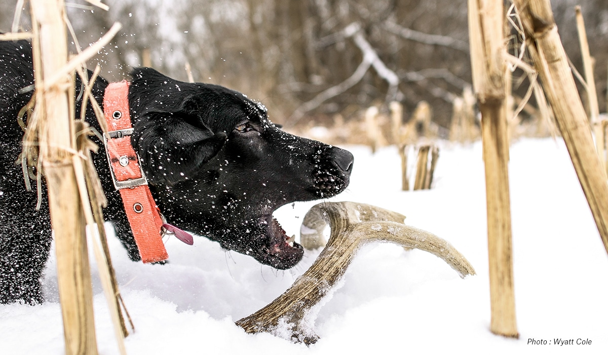 Shed Hunting Dogs in Snow - onX Hunt
