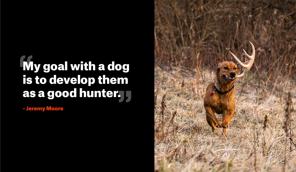 How to Train a Dog to Shed Hunt - onX Hunt