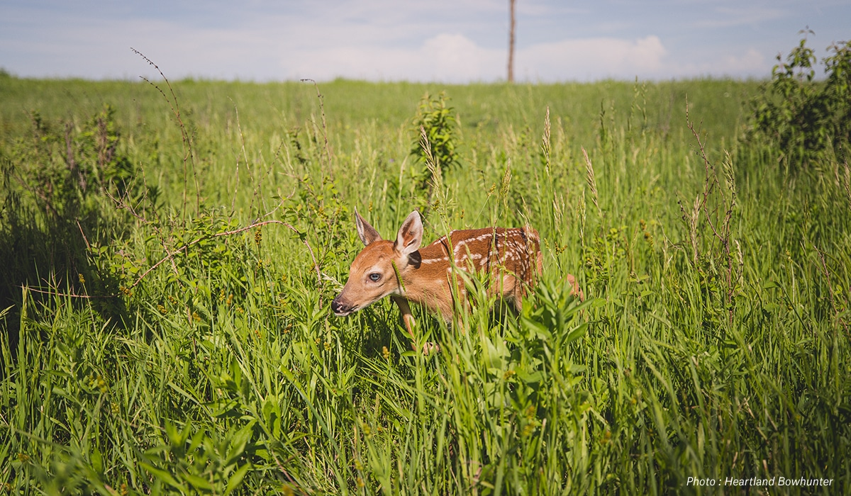 onX Whitetail Report for May - Fawn Survival