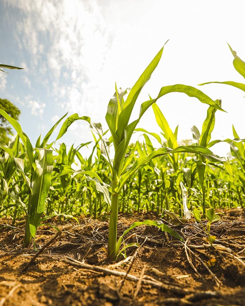 crop data