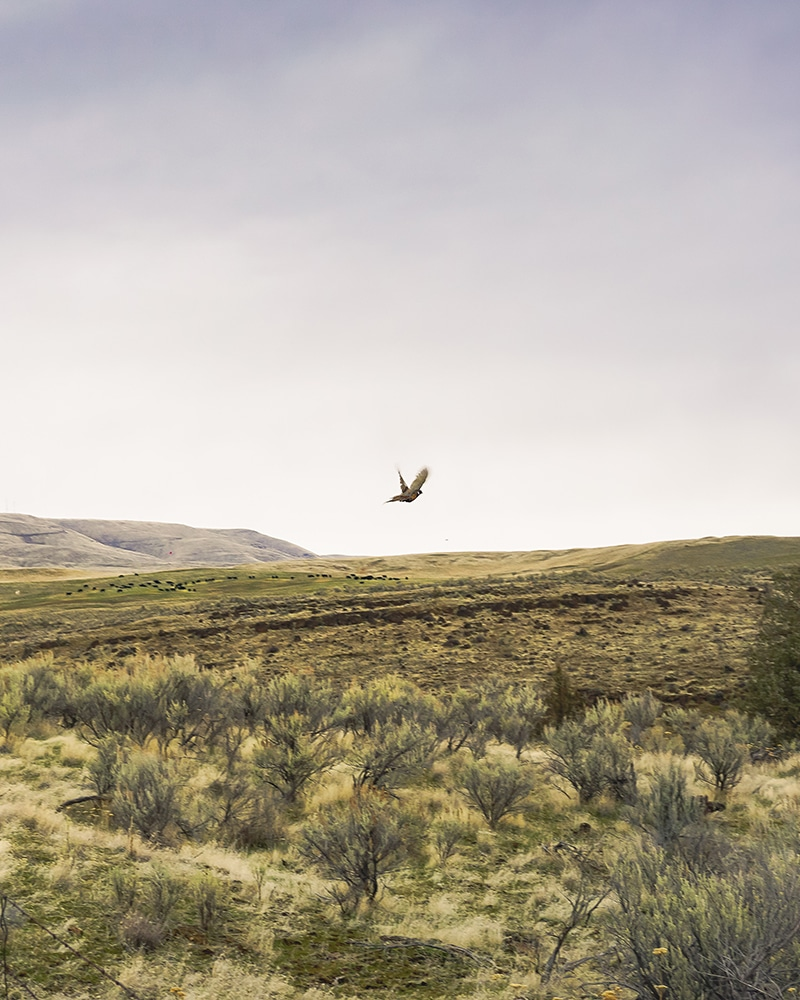 crop layers for upland bird hunting