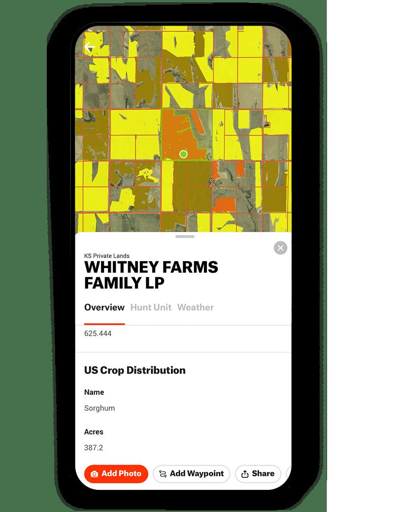 Sorghum crop data layer