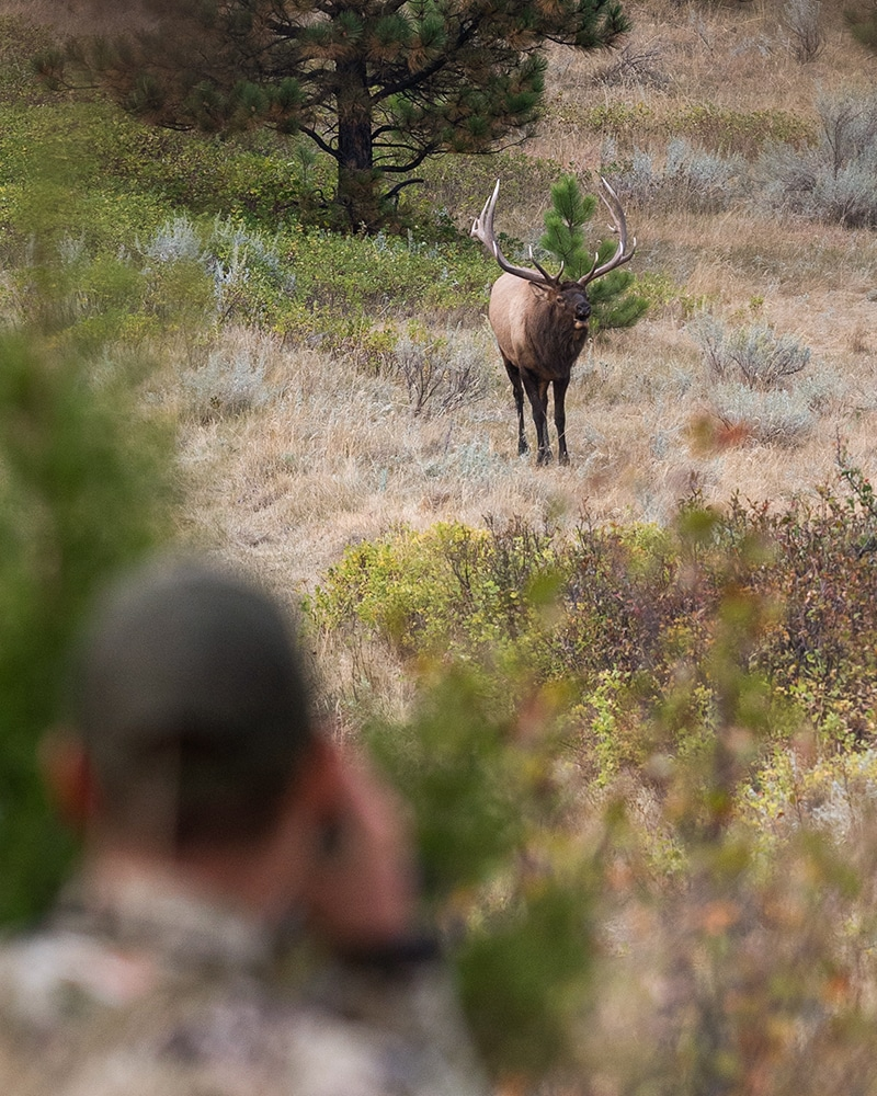 crop data layers for big game hunting