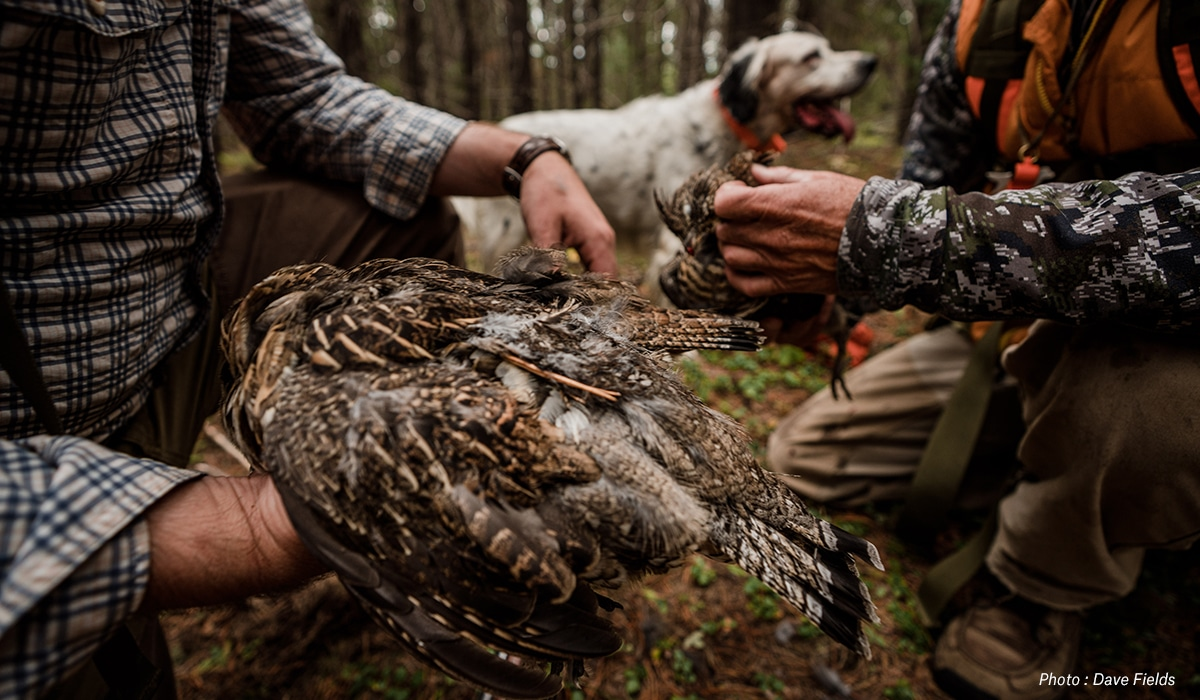Top Upland Bird States for 2021