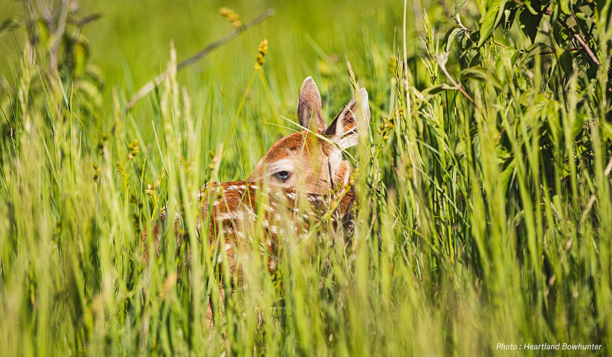 onX Whitetail Report - July - Fawn Survival
