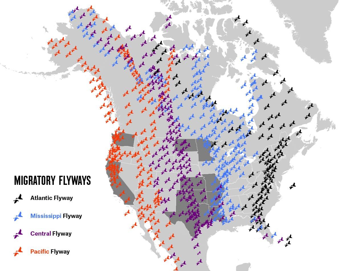 Migratory Flyways