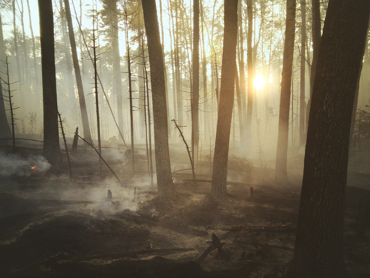 Wildfire impacts on the landscape